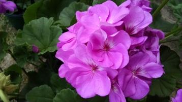 flowers from Bonlee Grown