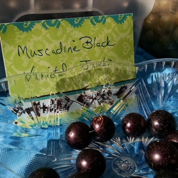 muscadine grapes from Crossin Back Vineyard