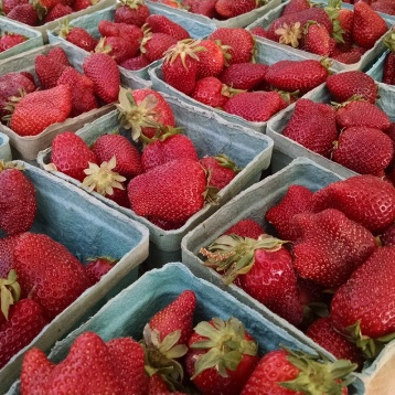 berries from Eco Farm