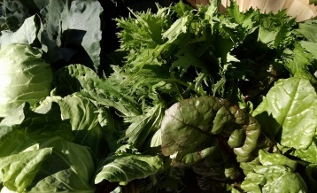 greens from Peaceful River Farm