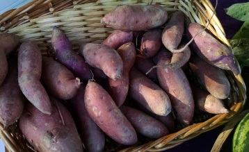 sweet potatoes from the Farm at Penny Lane