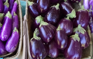 eggplant from Perry-Winkle Farm