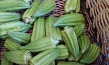 heirloom okra from Screech Owl Greenhouses