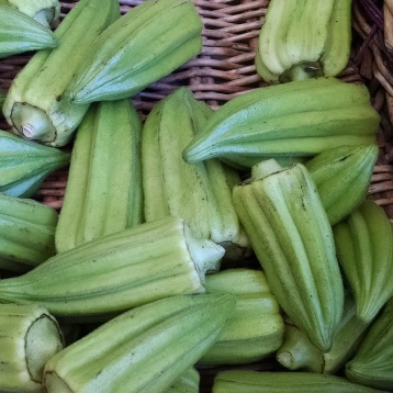 heirloom okra from Screech Owl Greenhouses