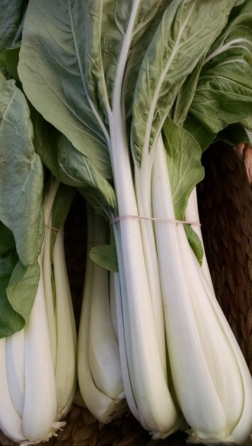 bok choy from the Sweet Farm
